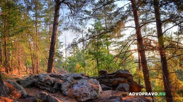 Аренда лесного участка
